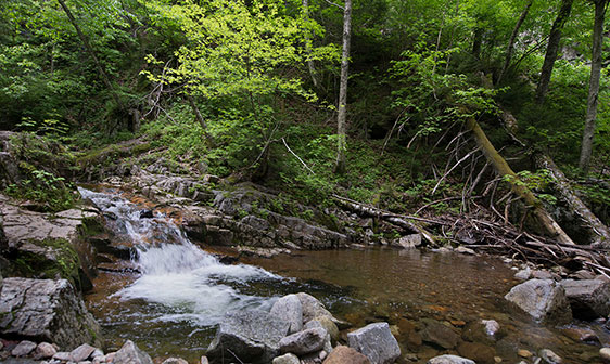 Stream in Keene Valley